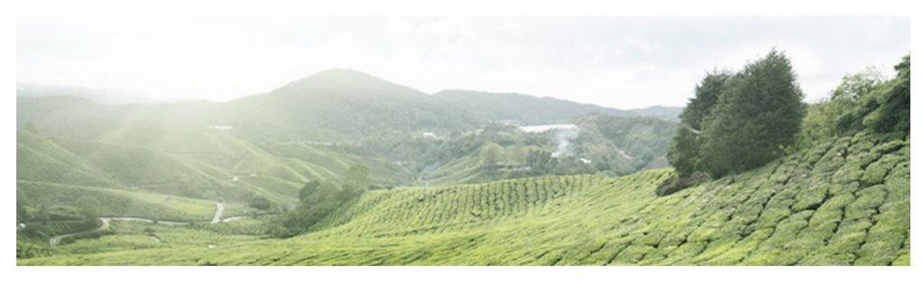 Isntree GREEN TEA FRESH TONER2.jpg