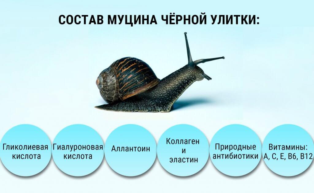 ЧЕРНАЯ-УЛИТКА.jpg