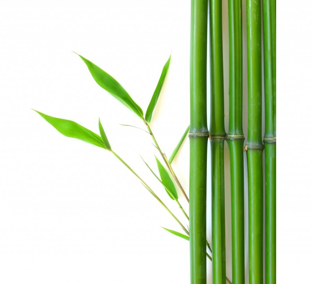 bamboo-with-roots-clipart-1.jpg